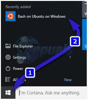 bash windows